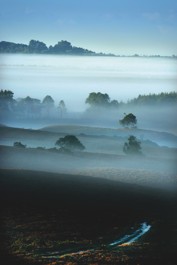 Early morning mist in the New Forest