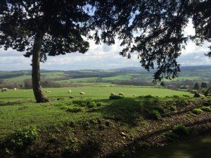 Wentworth Castle Gardens - sheep grazing in a field