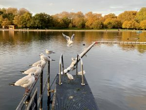 The Serpentine in Hyde Park