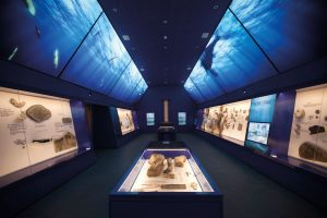 Gallery at The etches collection