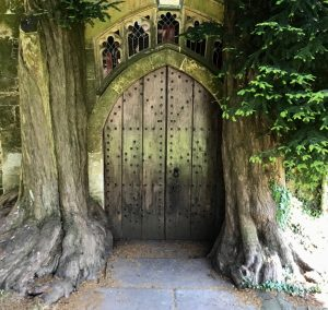church door amongst very large tree roots
